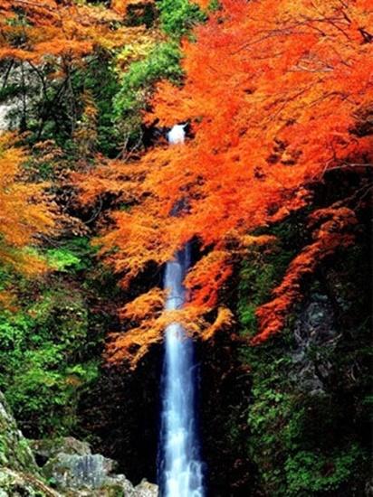 養老の滝もみじまつり2018開催日時はいつ