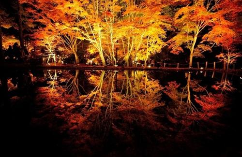 曽木公園紅葉祭りライトアップ