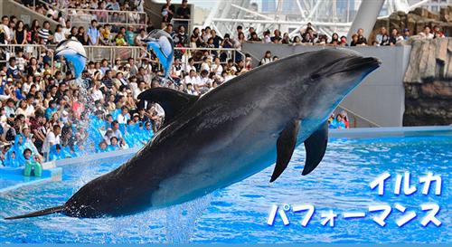 名古屋港水族館の公式駐車場の場所はどこ?満車の時に便利なコインパーキングと裏技はこれ!