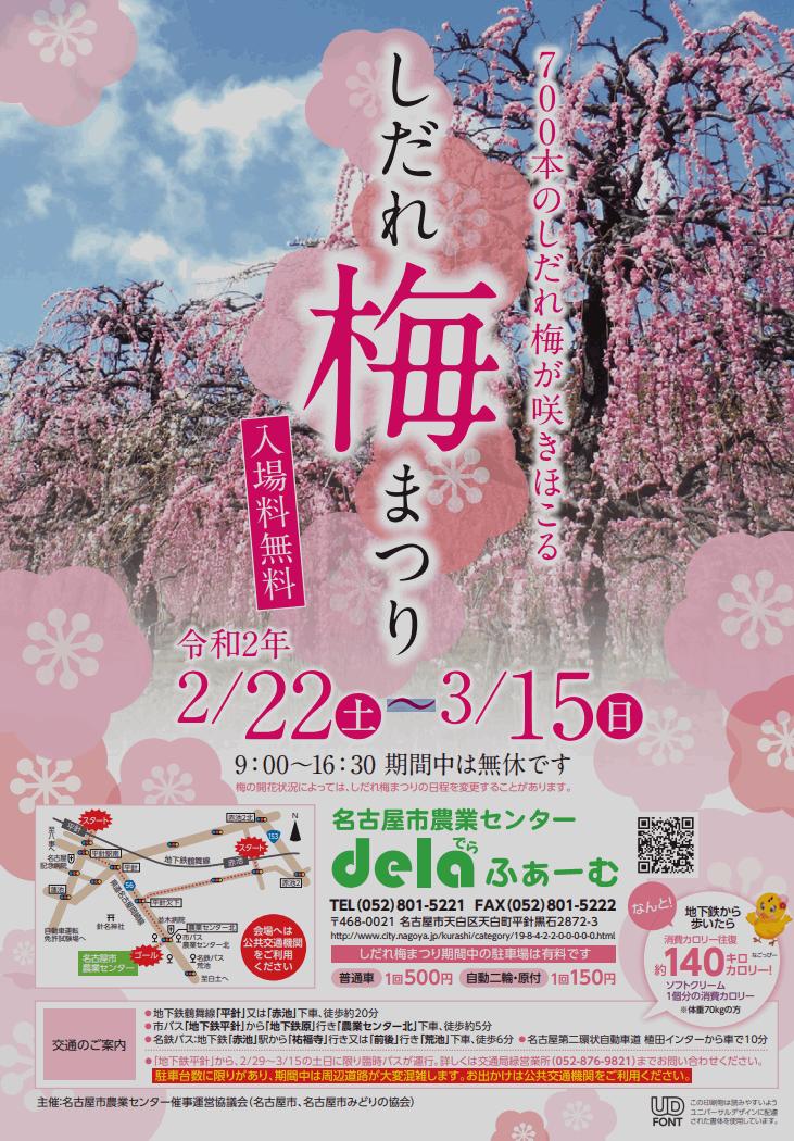 名古屋市農業センターのしだれ梅の見頃と開花