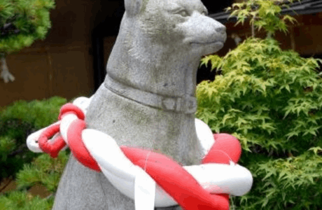 伊奴神社(名古屋市西区)犬の健康祈願はペットと行ける?お守りの種類・御朱印まとめ