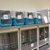 伊勢神宮の犬の預かり衛士見張所で預かってもらえる犬の種類は?