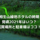 相生山緑地でホタルの時期見頃2021年はいつ?鑑賞場所と駐車場はココ!